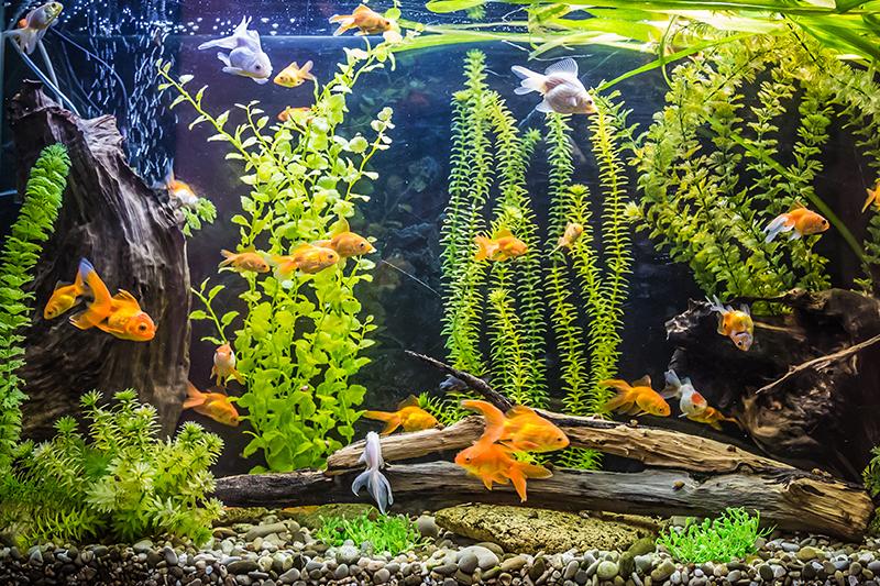 aquarium water check