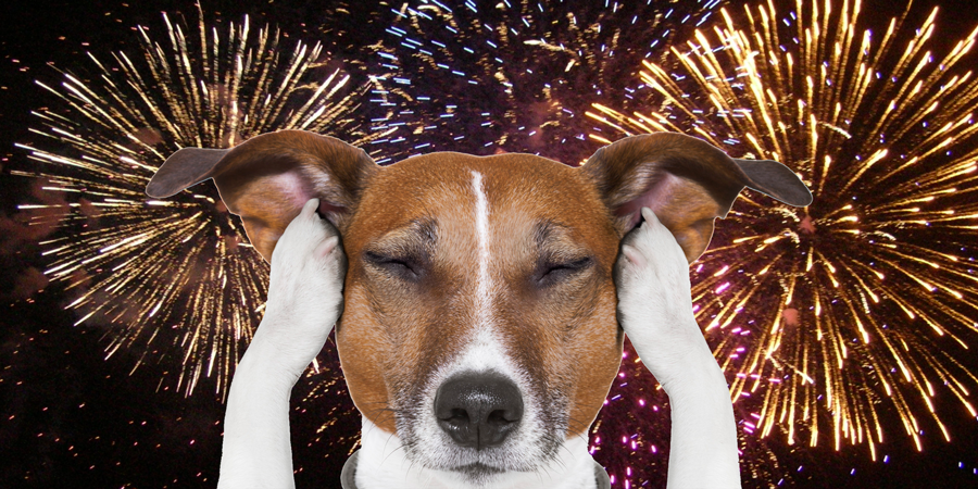 Helping Dogs Scared of Fireworks