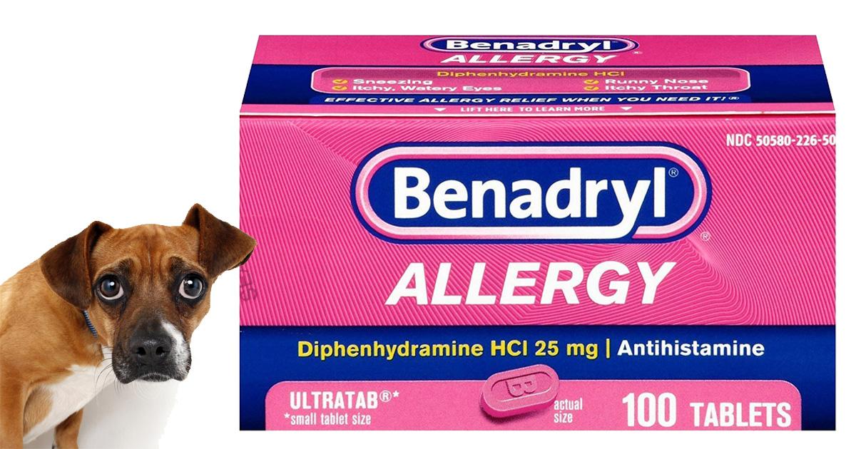 Can I Give my Dog Benadryl