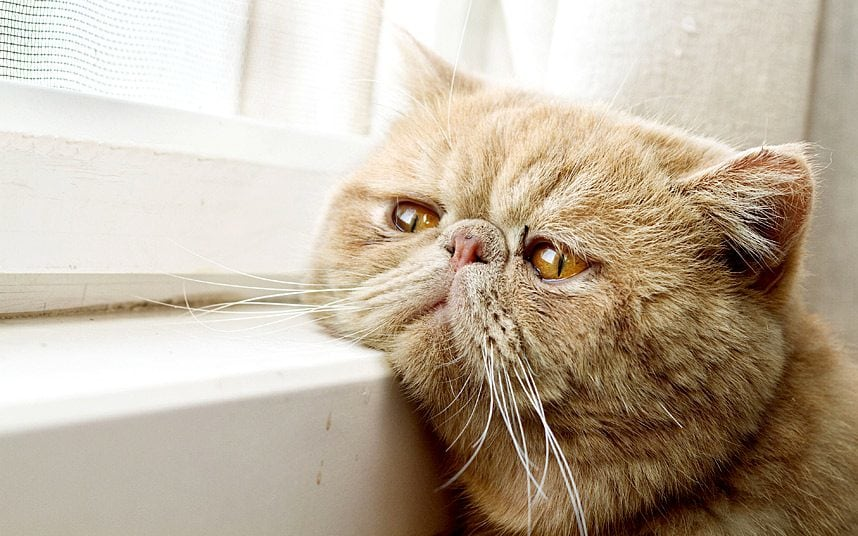 is your cat in pain?